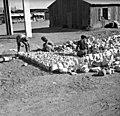 בית-זרע 1939 - בניית כביש הסולינג ליד מגדל המים - iוינטרשטייןi btm11423.jpeg