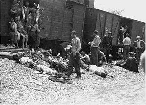 ヤシ・ポグロムの犠牲者 鉄衛団と民族主義者の連立政権が1942年に樹立... ルーマニアのユダヤ