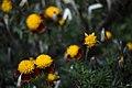 عکس از گلها و گیاهان باغ بوتانیکال تفلیس - گرجستان 04.jpg