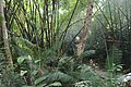 লাউয়াছড়া জাতীয় উদ্যান 12.jpg