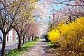 北海道道1148号札幌恵庭自転車道線(Shiroishi cycling road) - panoramio (1).jpg