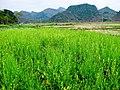 合山市北泗瀑泉风光 - panoramio (5).jpg