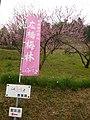 広橋梅林のぼり A labarum of Hirohashi-bairin 2011.3.06 - panoramio.jpg