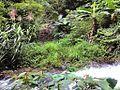 惠州博罗红花嶂越野穿越-大救援20140524-25 - panoramio.jpg