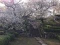 旧円融寺庭園 - panoramio (2).jpg