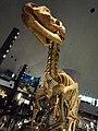 福井県立恐竜博物館 - panoramio (1).jpg