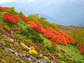 赤岳の紅(Rouge of the Red Mt.) - panoramio.jpg