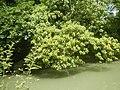 0243Views of Sipat irrigation canals 39.jpg