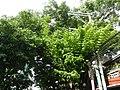 05051jfLeon Guinto Buildings Pedro Gil Marcelino Street Malate Manilafvf 01.jpg