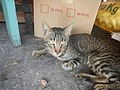 0560Cat portraits in the Philippines 15.jpg