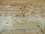 09461jfRoads Paddy fields Domesticated ducks Paligui Candaba Pampangafvf 17.JPG