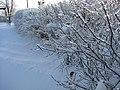 09 IceStorm Indiana (3).JPG