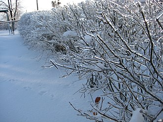 January 2009 North American ice storm - Image: 09 Ice Storm Indiana (3)