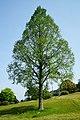 140427 Izumo Tamatsukuri Historical Park Matsue Shimane pref Japan04bs4.jpg