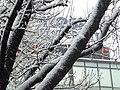 1437 - Neve a Milano - Foto Giovanni Dall'Orto 28-Dec-2005.jpg