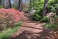 15-13-016, azalea trail - panoramio.jpg