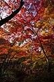 191116 Zuihoji park01s3.jpg