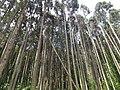 1 Iwafuneminatomachi, Murakami-shi, Niigata-ken 958-0058, Japan - panoramio.jpg