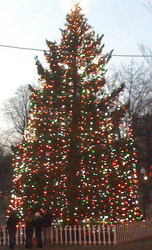 boston christmas tree - Ross Christmas Decorations