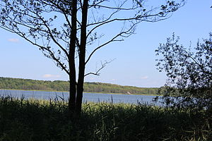 Damerower See - view of the lake from Neu Damerow