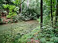 20130912020DR Obernaundorf (Rabenau) Gückelgrund Poisenwald.jpg