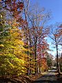 2014-11-02 13 53 53 Trees during autumn along Poor Farm Road in Hopewell Township, New Jersey.JPG