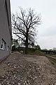 20140405164003 Linz Prielmayr-Eiche 4932.jpg