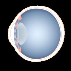 201405 eye.png