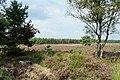 20140822 Koningsheide ten noorden van Arnhem.jpg