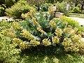 2015-05-27 Paris, Jardin des plantes 26.jpg