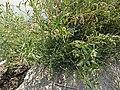 2015.08.22 10.45.16 DSC00190 - Flickr - andrey zharkikh.jpg