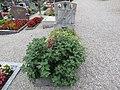 2017-09-10 Friedhof St. Georgen an der Leys (332).jpg