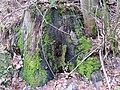 2018-01-12 (104) Pflanzen im Haltgraben, Frankenfels.jpg