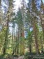 20210 Merced grove.jpg