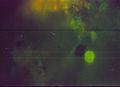 21 puccinia tirolensis zwetko 13.10.jpg