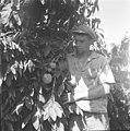25 שנה לדגניה ב, מטע הבננות-ZKlugerPhotos-00132q0-09071706851384a0.jpg