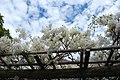 2 Chome-1 Yukinoshita, Kamakura-shi, Kanagawa-ken 248-0005, Japan - panoramio - jetsun (3).jpg