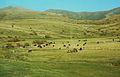 426 Paysage arménien région de Sissian.JPG