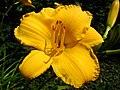 4517 - Bern - Rosengarten - Flower.JPG