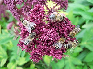 Six Bees