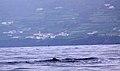 Açores 2010-07-21 (5117819565).jpg