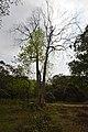 AJC Bose Indian Botanic Garden - Howrah 2018-04-01 2395.JPG
