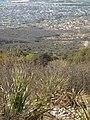 A 900 mts de los asaderos del camino del cuatro, sierra de Zapalinamé - panoramio.jpg