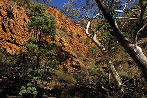 Vulkathunha-Gammon Ranges National Park - Typical Gammons gorge