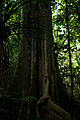 A Walk in the Jungle (Imagicity 315).jpg