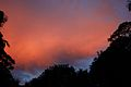 A Winter Sky, Sunrise, My Backyard, Sydney Australia (3566183325).jpg