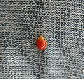 A beautiful bug on the jeans.jpg