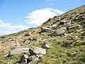 A boulder field - geograph.org.uk - 399664.jpg
