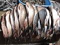 A close-up of fish4.JPG