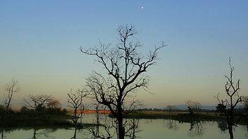 A dead tree in mud of a ash pond.jpg